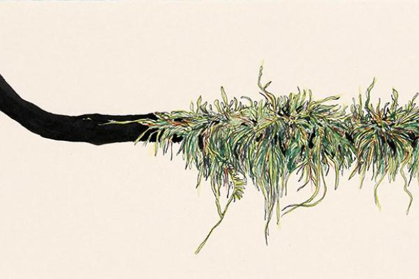 Moss